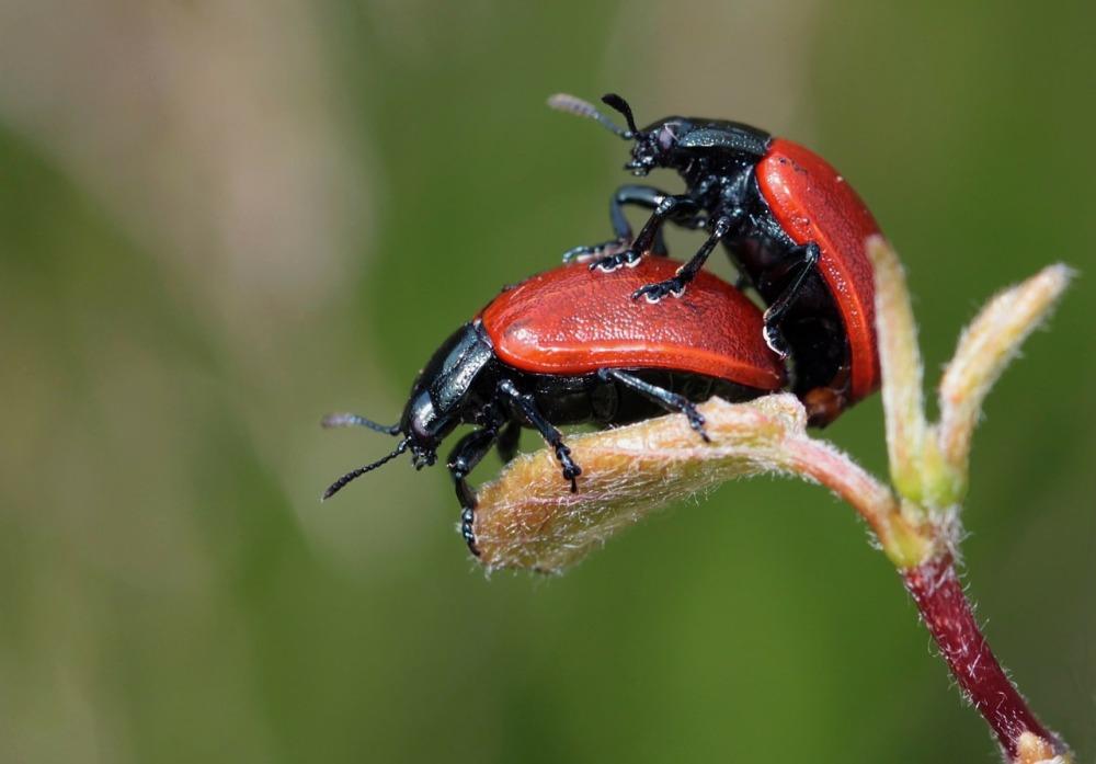 ladybug-248481_1280