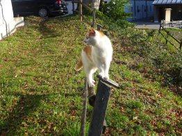 Irgendwo ist immer eine Katze2